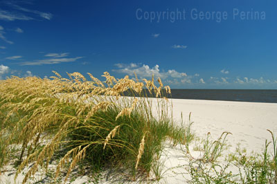 Biloxi Beach Sea Oats